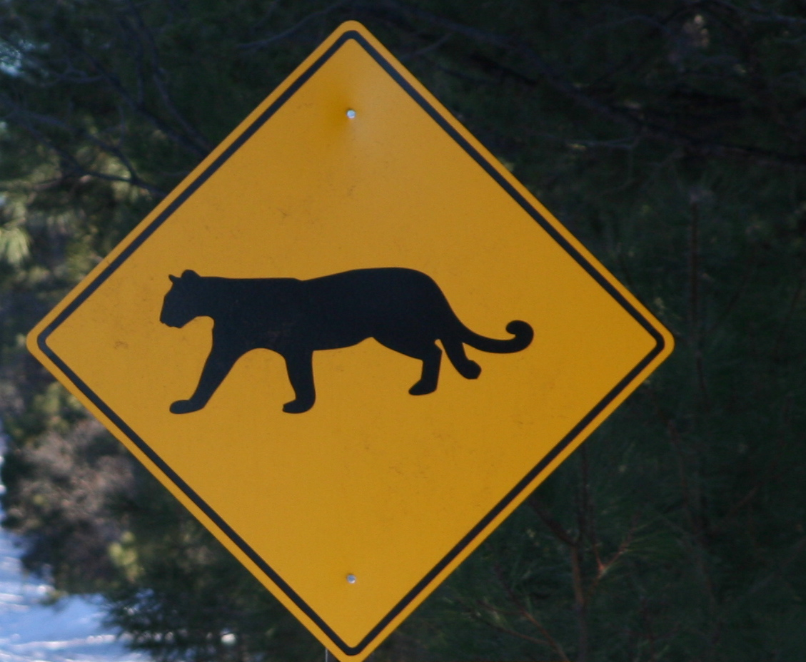 Mtn_Lion_crossing