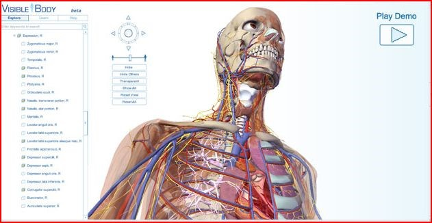 Interactive Visible Body Human Anatomy Atlas Database Allows